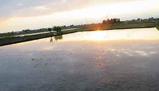 田んぼに日の出