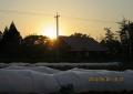 西瓜畑に日が沈む
