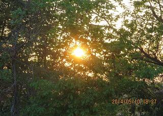 午後6時半樹間に日沈む