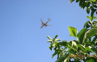 リンゴ園から飛行機