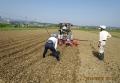 大豆種蒔き