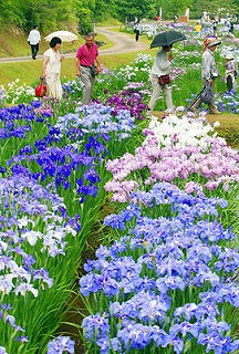 頼成の森の花しょうぶ祭り