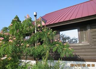 山荘とネムの花