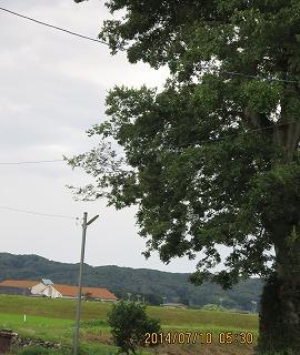 校舎と大木