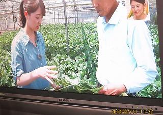 ハウス枝豆
