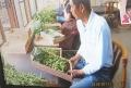 枝豆の産地