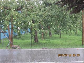 驟雨のりんご園