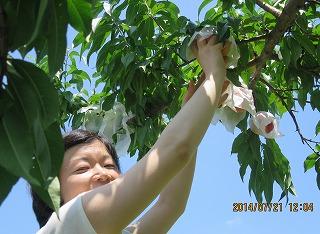 安達さん桃摘み