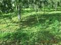 刈り草と木陰