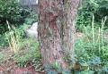 松の幹と水仙