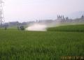 稲の病害虫防除