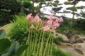 庭は晩夏の花