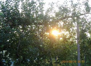 樹間に太陽