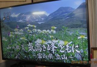 NHK高山植物採用
