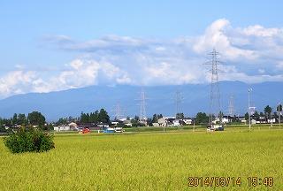 稲刈り日和