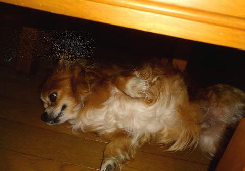 テーブルの下でチョコ