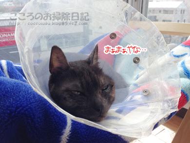 hanmokkuribu002-04-2014.jpg