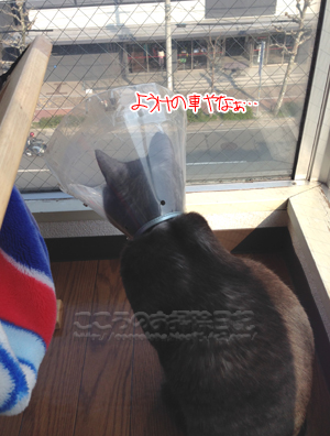 osotoribu001-03-20-14.jpg