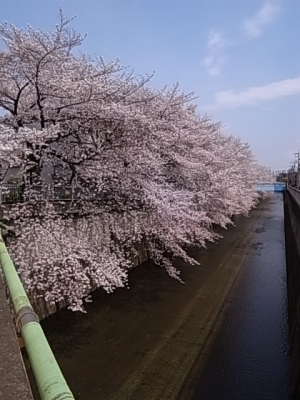 20140401sakura6.jpg