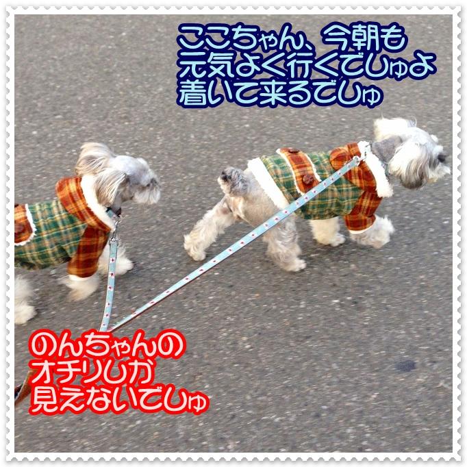coconon_一列でお散歩するでしゅ