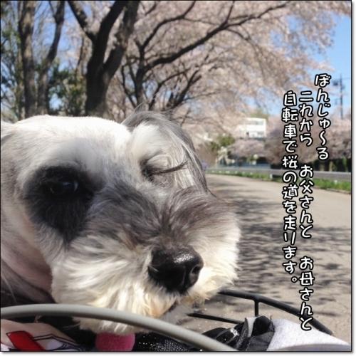 coconon_お花見サイクリングab