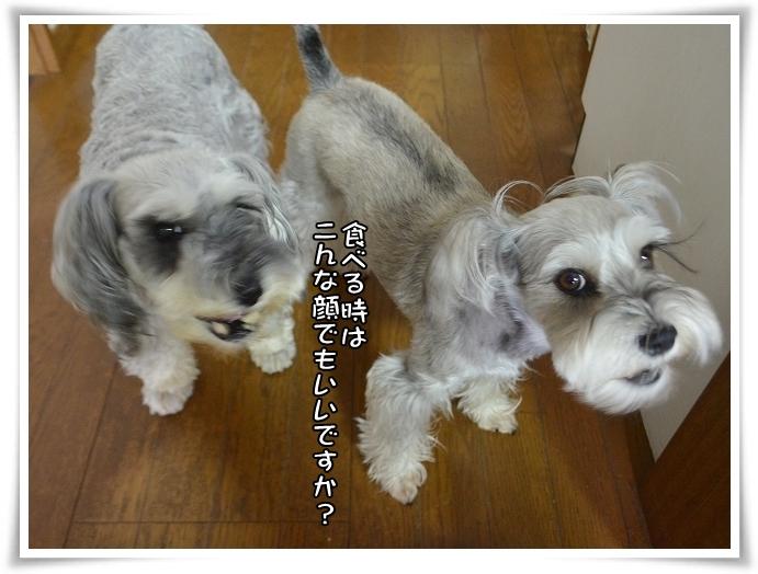coconon_ワイルド
