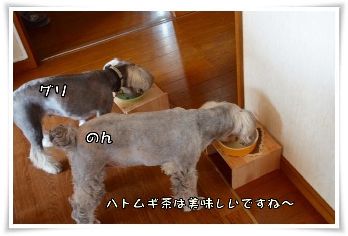 coconon_20140410_26621.jpg