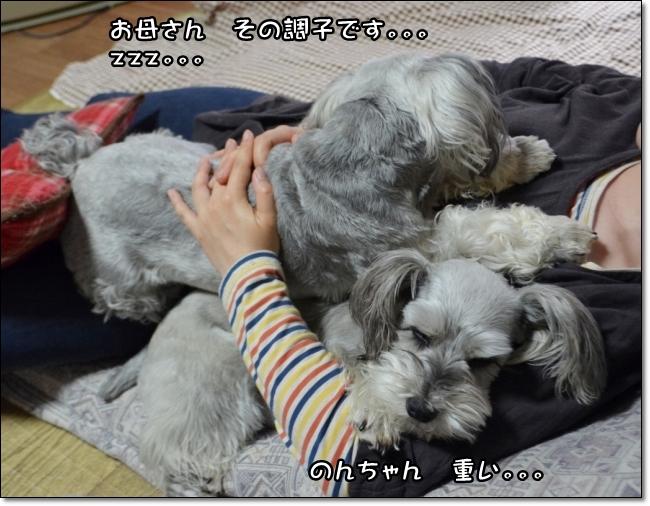 coconon_20140429_26832.jpg