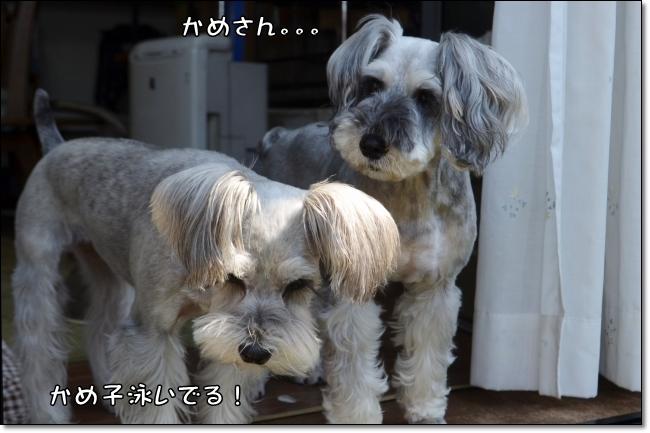coconon_20140601_25548.jpg