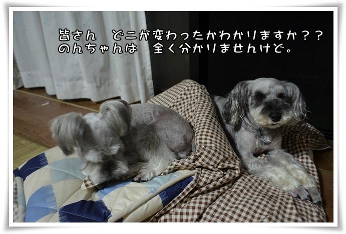 coconon_20140720_26373.jpg