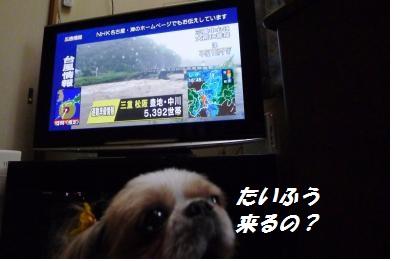 台風2014-1