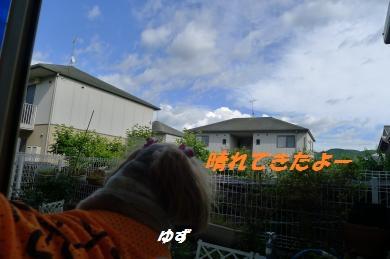 y298.jpg