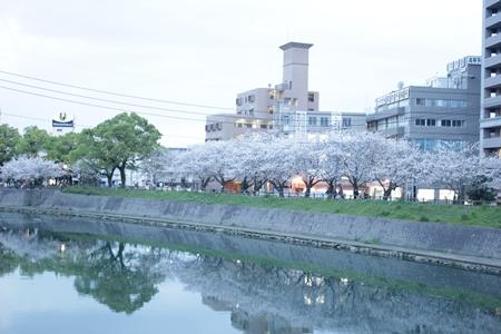 2014sakura2