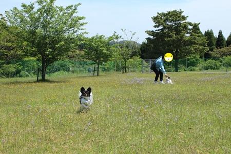 20140506_07b.jpg