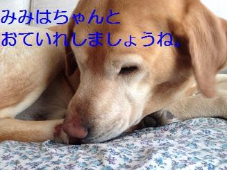 IMG_0650.jpg