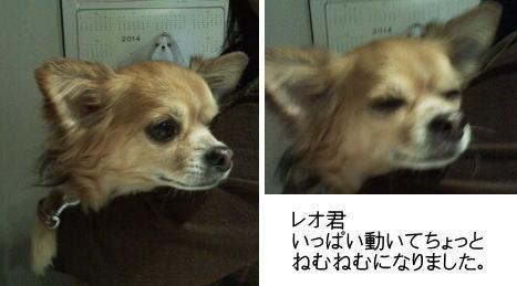 20140415レオちゃん