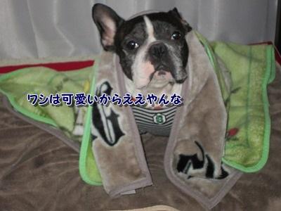 お詫び (3)