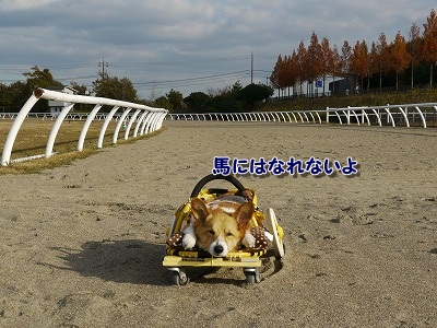 競走馬 (5)