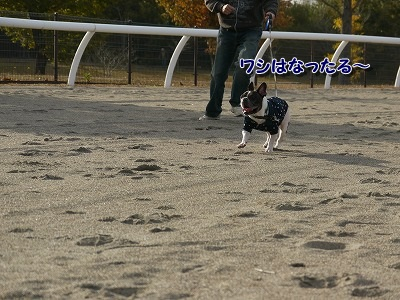 競走馬 (8)