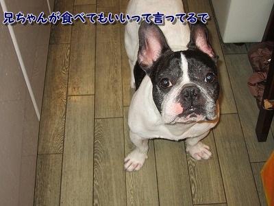 初物 (3)