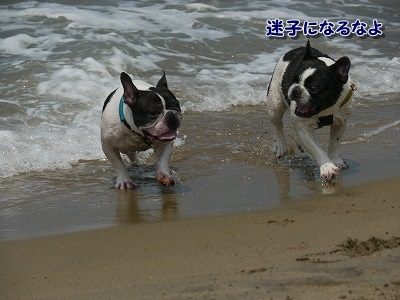 白兎海岸2 (1)