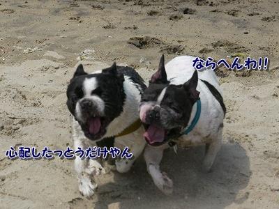 白兎海岸2 (3)