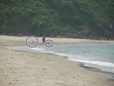 白兎海岸2 (5)