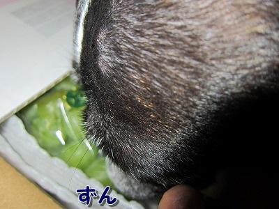 ぶどう (2)