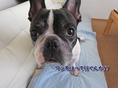 お盆 (1)