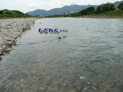 泳ぐ (3)