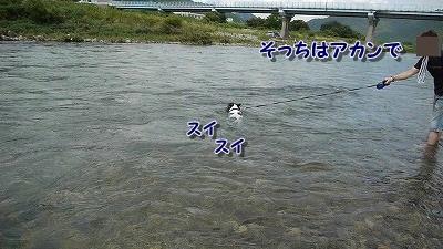 泳ぐ (1)