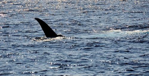 Blue Whale 6
