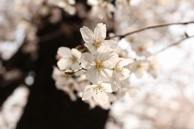 shuku-IMG_6358.jpg