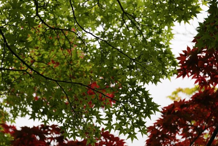 kansyuji1405_05.jpg